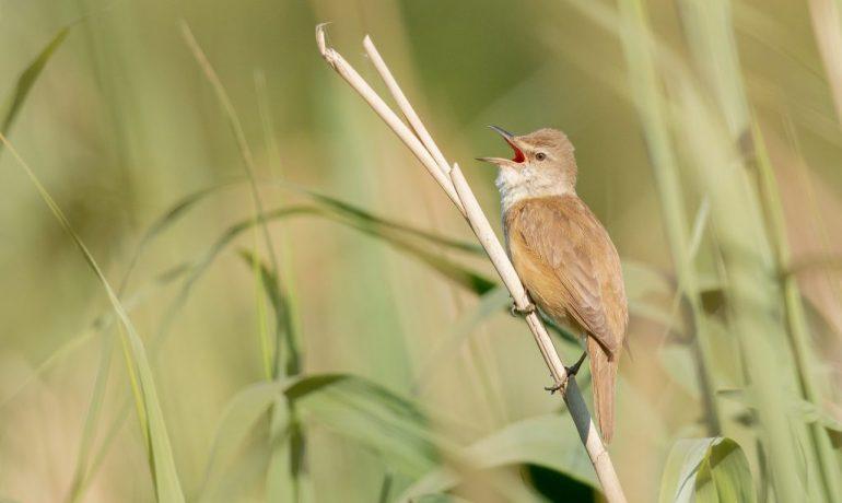 cuidados de los pájaros cantores