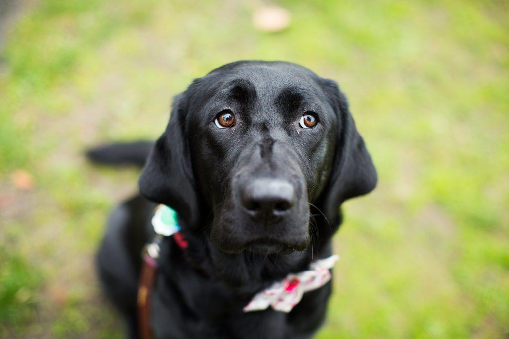 descuidar la higiene del perro puede acortarle la vida