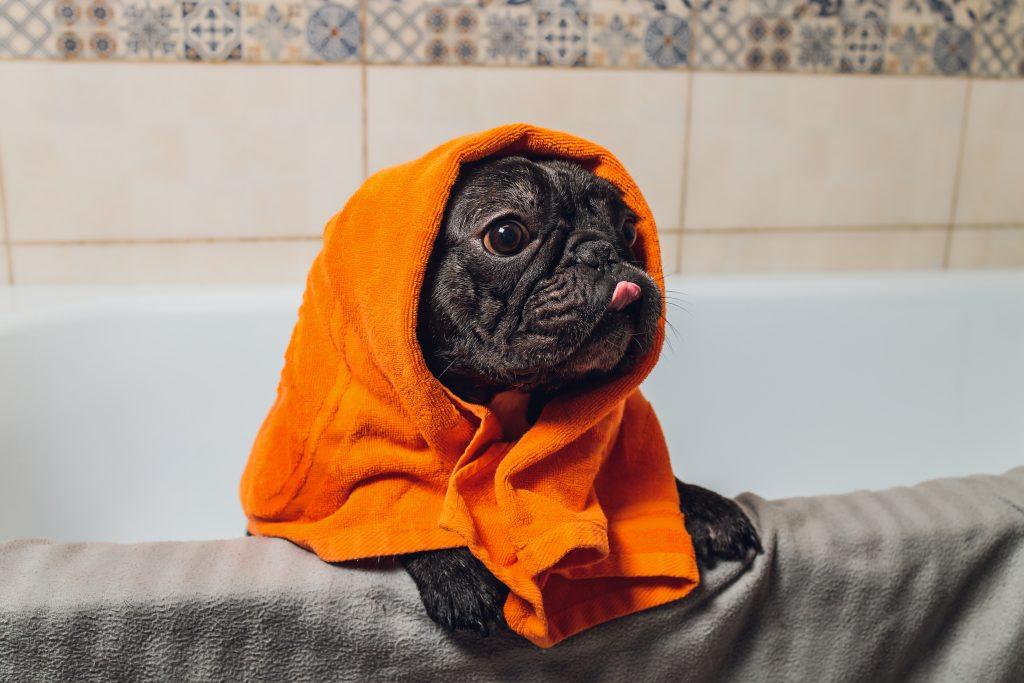 es importante secar bien al perro tras el baño
