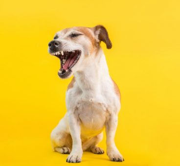 estornudo inverso en perros