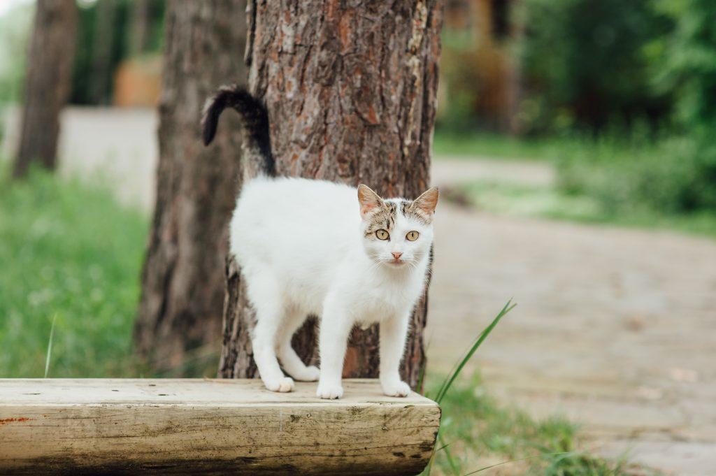 las heces de los gatos infectados pueden contagiar la toxoplasmosis