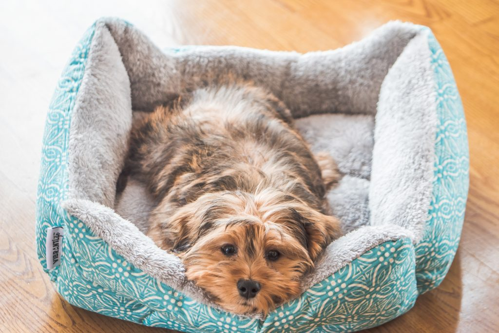 no proporcionarle actividad física y mental puede estar acortando la vida de tu perro