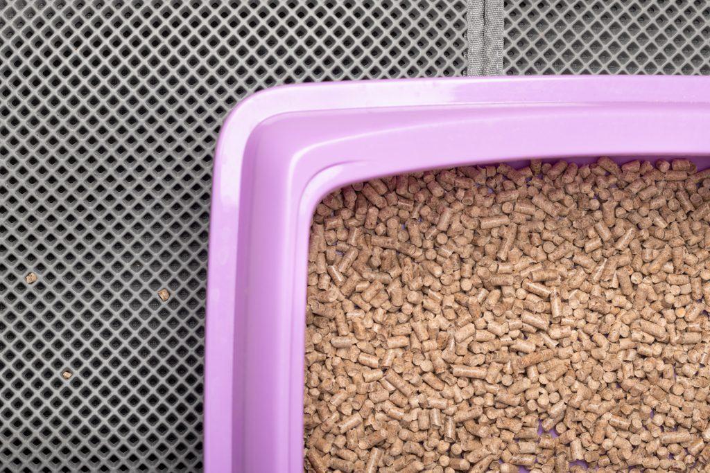 pasos para enseñar a un conejo a usar la bandeja de arena