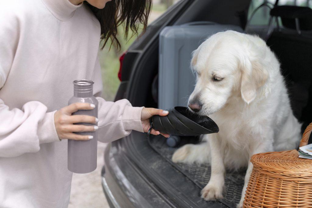 por qué se puede estresar un perro