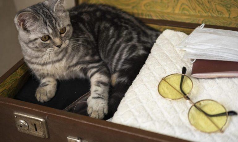 qué hacer con el gato en vacaciones