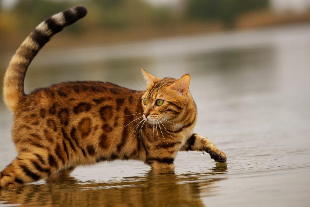 tips para refrescar a un gato en verano