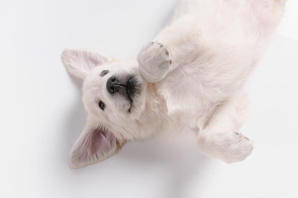 un perro demuestra su amor con lenguaje corporal positivo