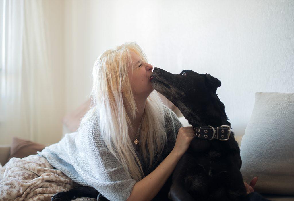 un perro demuestra su amor cuando te lame de vez en cuando