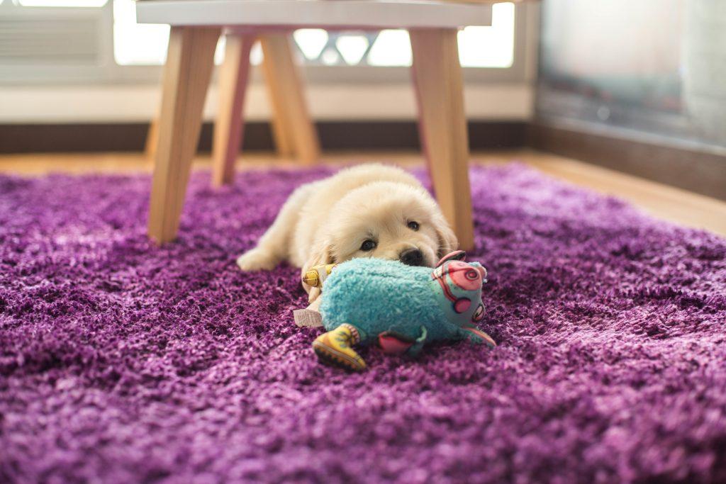 un perro demuestra su amor cuando te presta sus juguetes