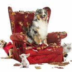 consejos para tratar con un perro dominante