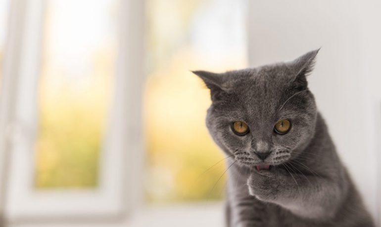 malta para gatos