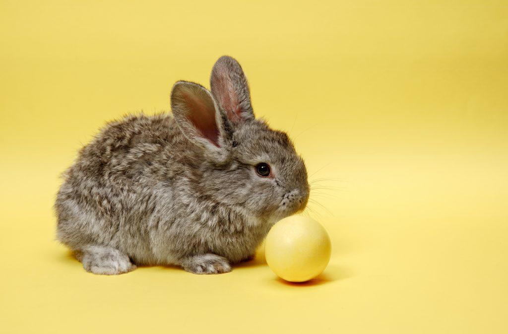 recipientes de agua para el conejo