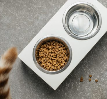 signos de deshidratación en gatos