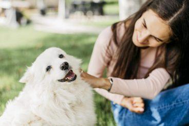 acariciar a los perros