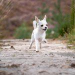 cómo hacer que tu perro acuda a tu llamada