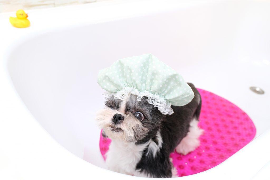 Consejos para que el perro huela bien sin usar perfumes para perros