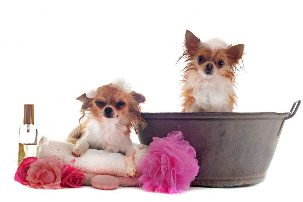 El uso de perfumes para perros no está aconsejado