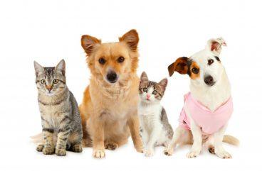 esperanza de vida de las mascotas
