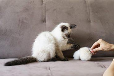 juguetes prohibidos para gatos