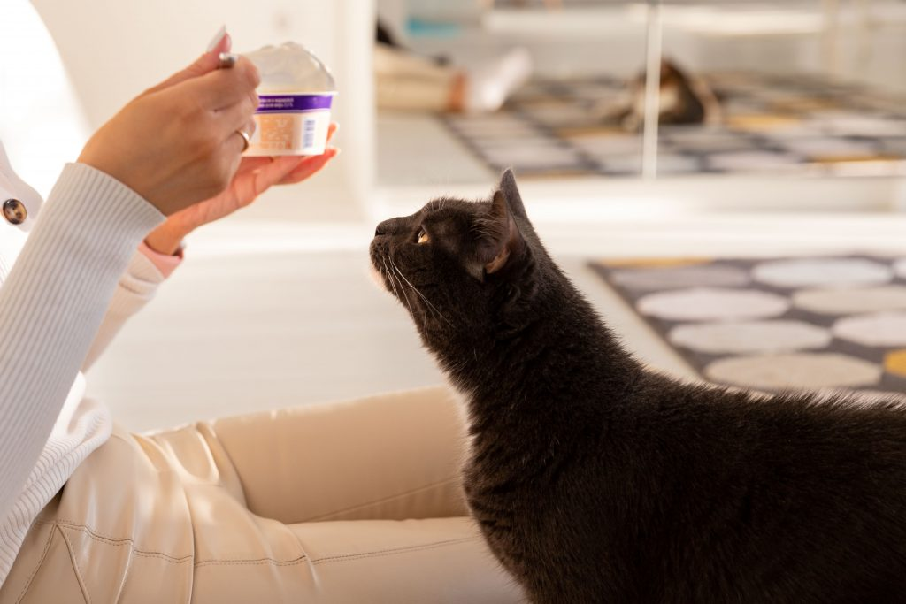 los gatos pueden comer yogur natural moderadamente