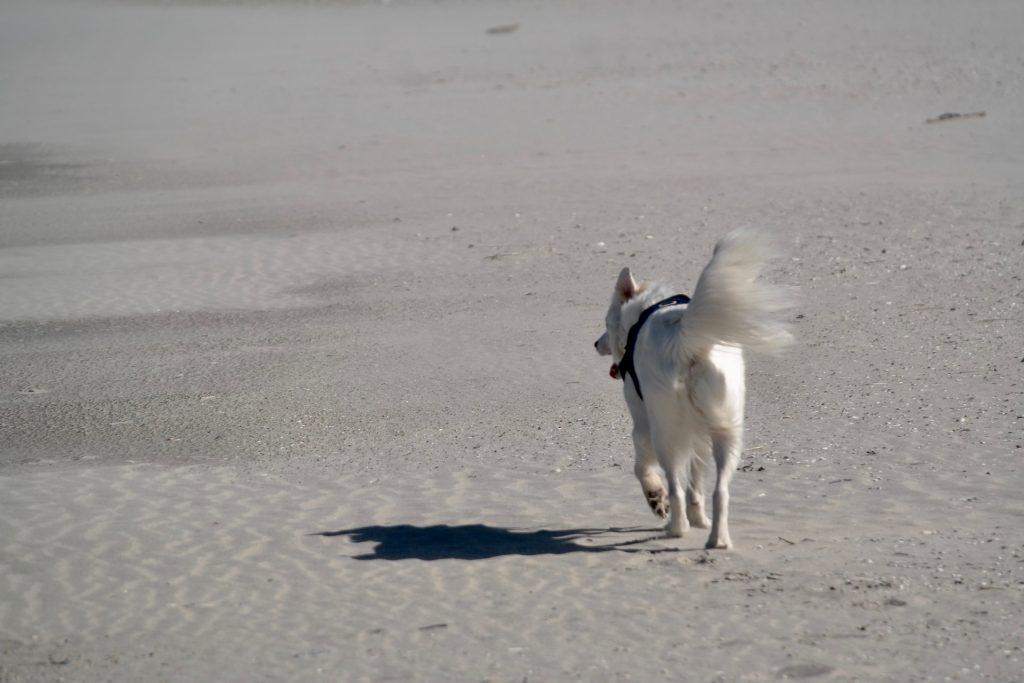 por qué mi perro persigue las sombras
