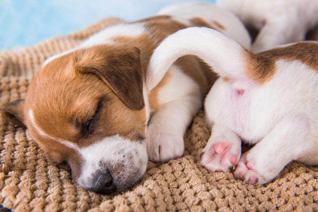 tips para hacer que un cachorro duerma toda la noche