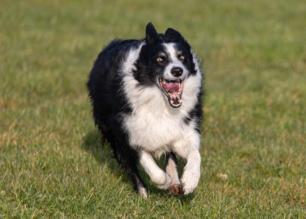tips para saber cómo hacer que un perro acuda a tu llamada