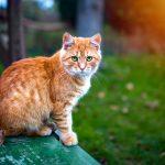 6 hábitos que tu gato hereda de los felinos salvajes