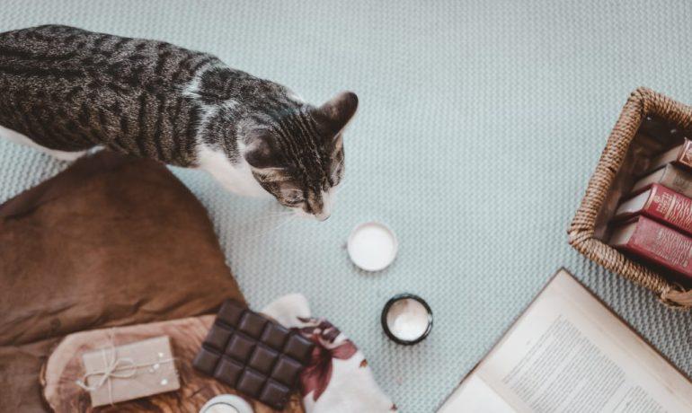 chocolate para gatos es bueno o no