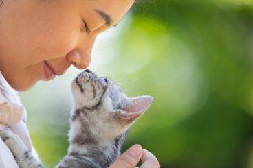 Cómo demuestran los gatos amor