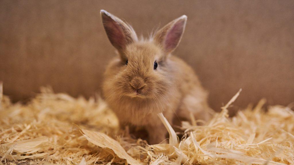 cuánto tiempo vive un conejo si se le cuida