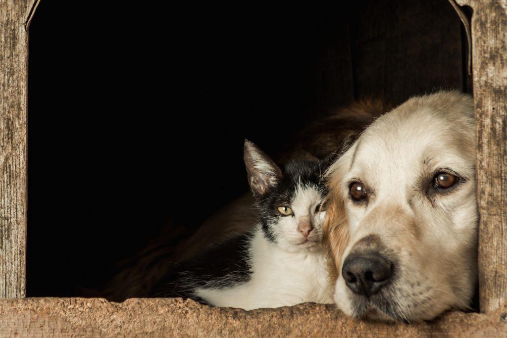 El Día Mundial de los Animales se recuerda la importancia de proteger a todas las especies