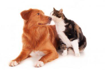 El DNI para mascotas puede ser obligatorio