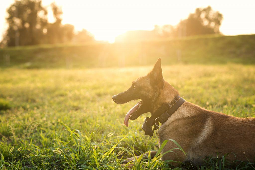 La ley de protección animal prohibe dejar a los perros solos más de 24 horas