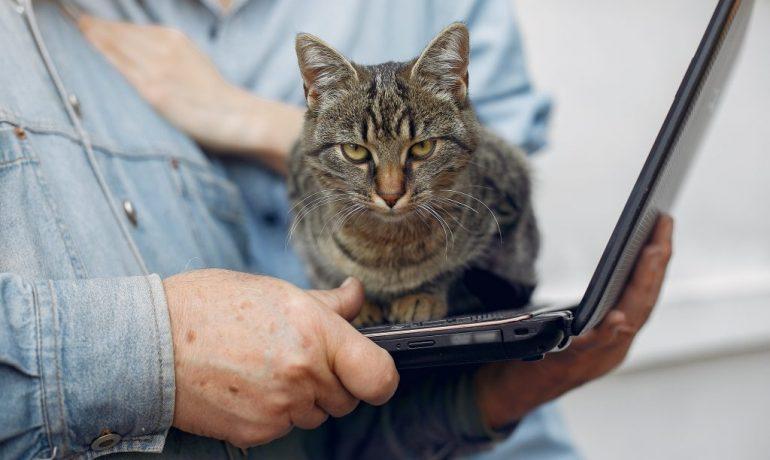 Por qué a tu gato le encanta sentarse sobre el teclado del ordenador