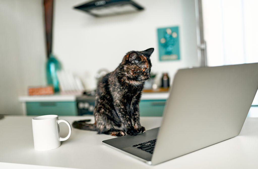 Razones de por qué a tu gato le encanta sentarse sobre el teclado del ordenador