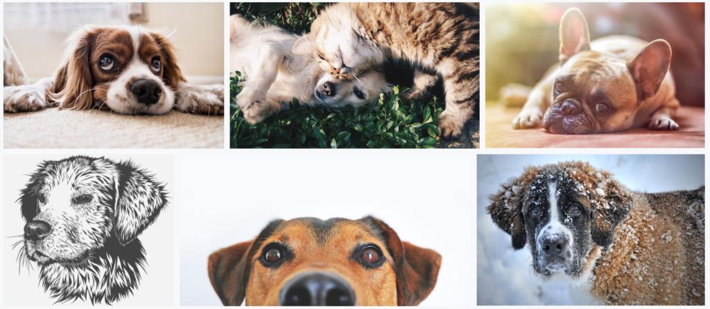 Consejos para usar las redes sociales de tu clínica veterinaria