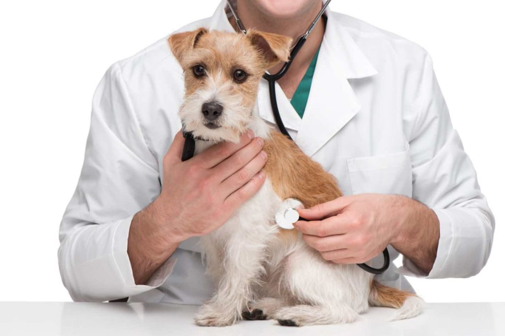 Consejos para dar malas noticias en tu centro veterinario