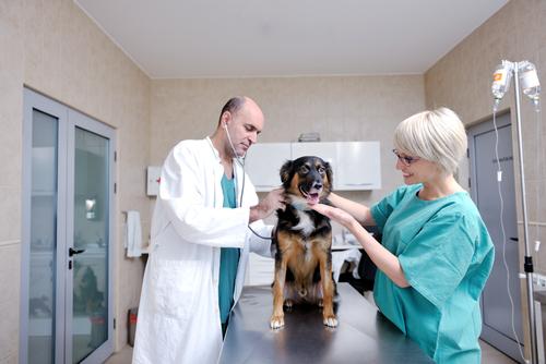 Publicidad en la Clínica Veterinaria