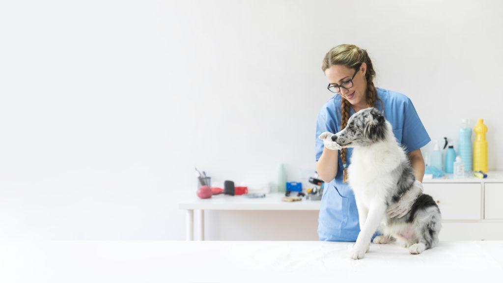 atención al cliente en tu clínica veterinaria