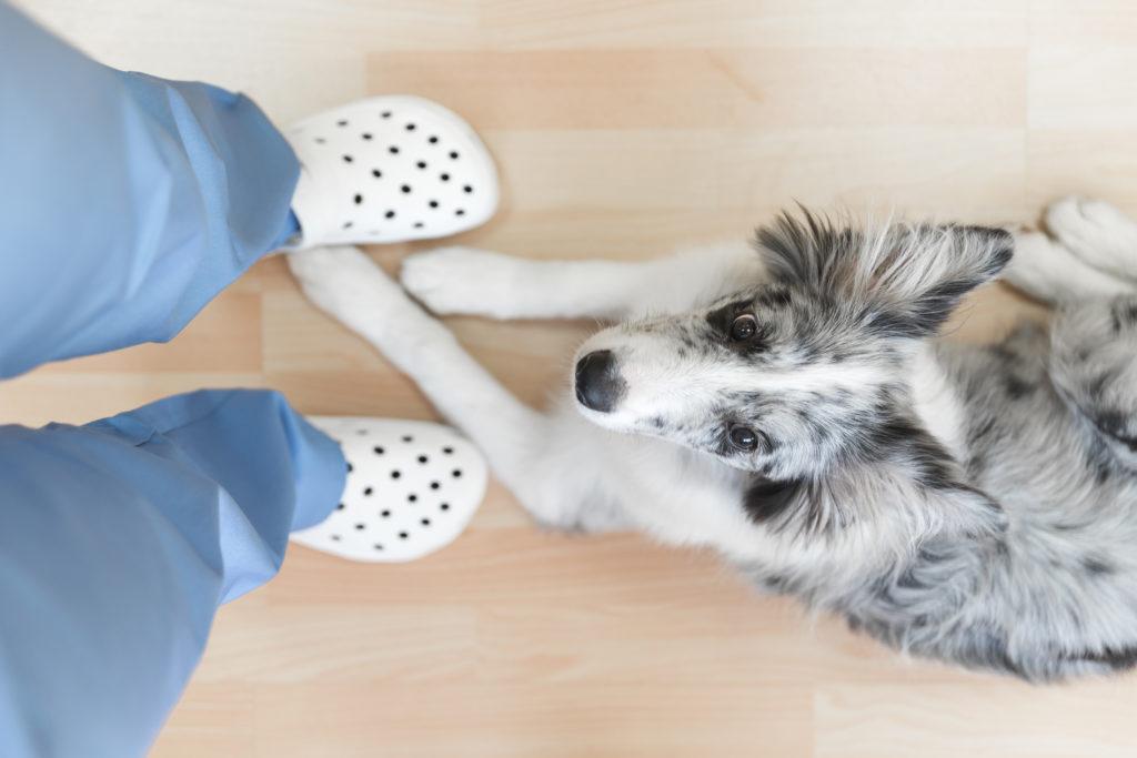 hacer merchandising en tu clínica veterinaria