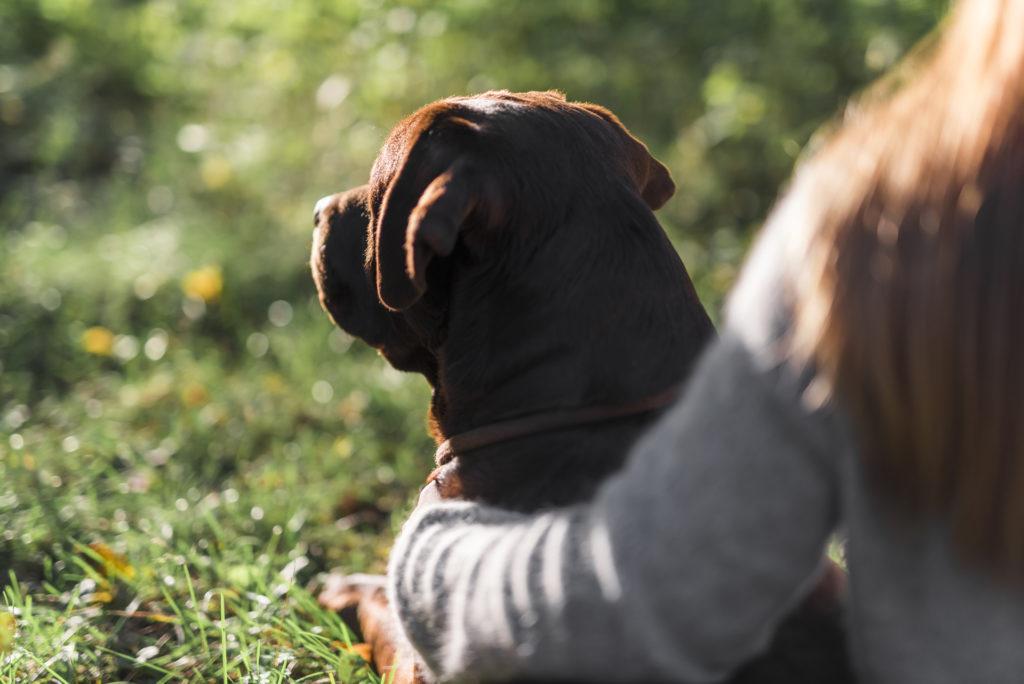 La fidelización en los clientes en una clínica veterinaria