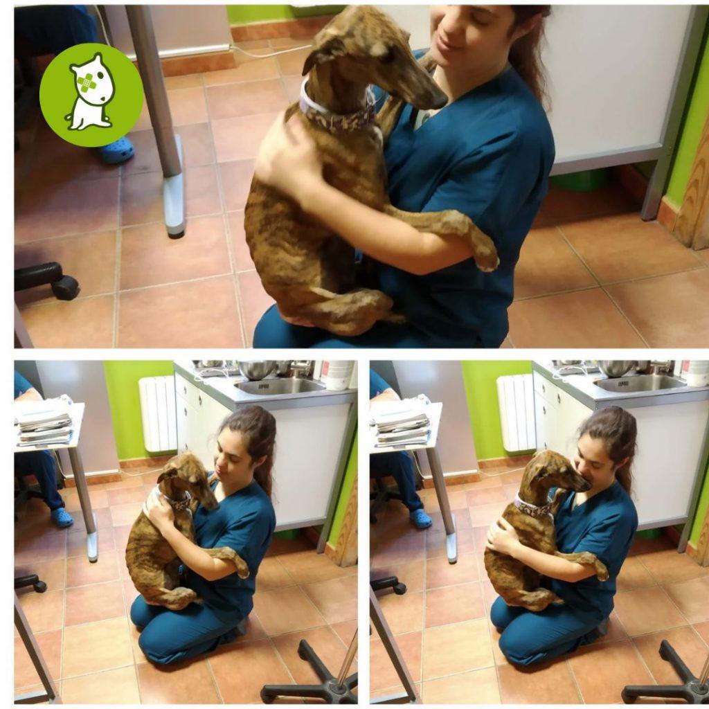 Veterinarios de Vetermascotas