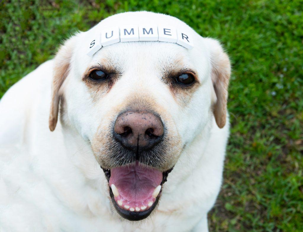 algunos consejos veterinarios para tus clientes en verano