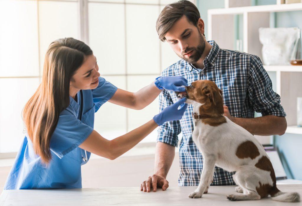 cómo dar estos consejos veterinarios para tus clientes en verano