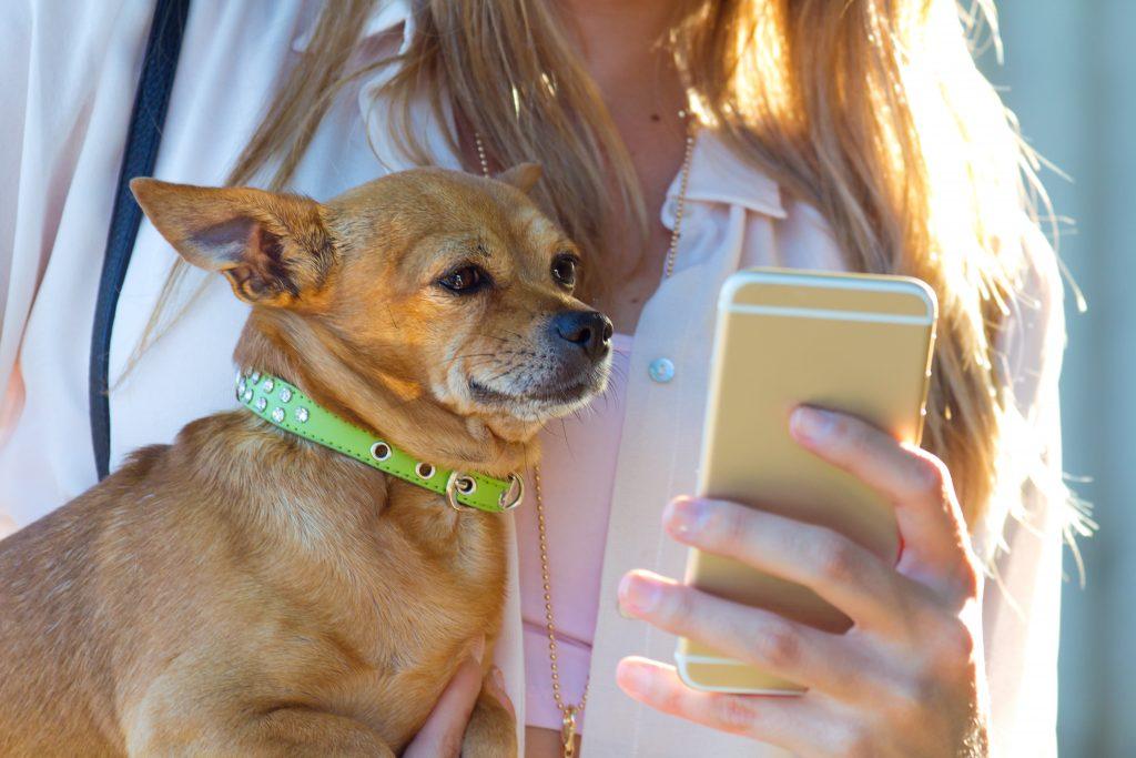 debes tener un buen diseño responsive en la web de tu clínica veterinaria