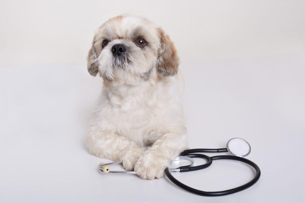El sector veterinario está en un proceso de cambios continuos