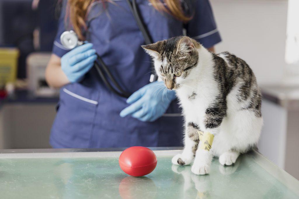 mejora el posicionamiento local en google de tu veterinaria con estos consejos